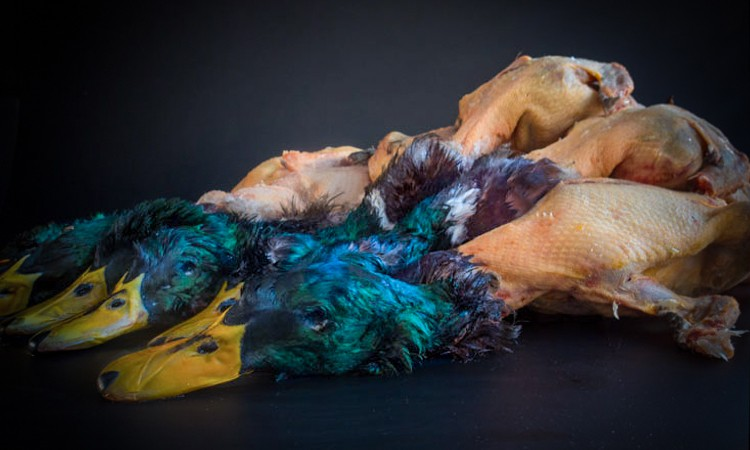 Pato azulón asado a la mantequilla negra