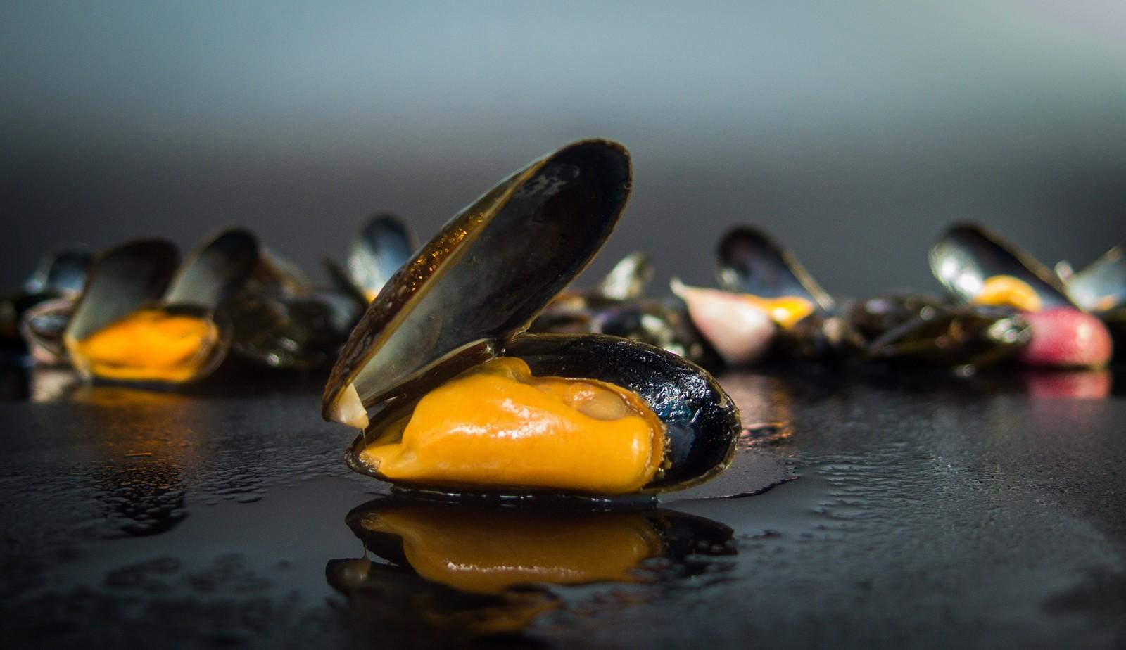 Bouchot mussels with garlic, herbs & white wine
